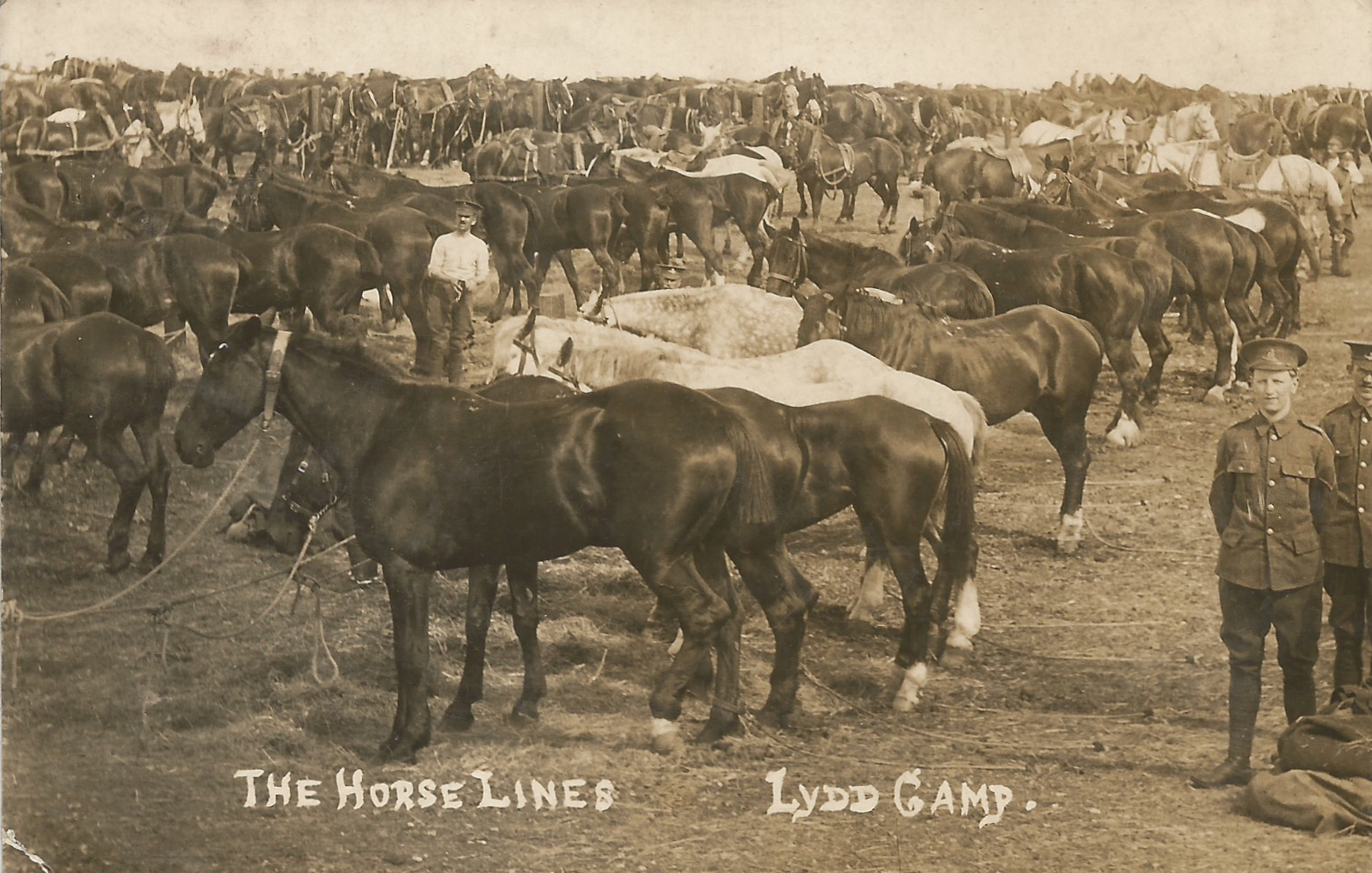 Royal Field Artillery Horse Lines at Lydd Camp 1911